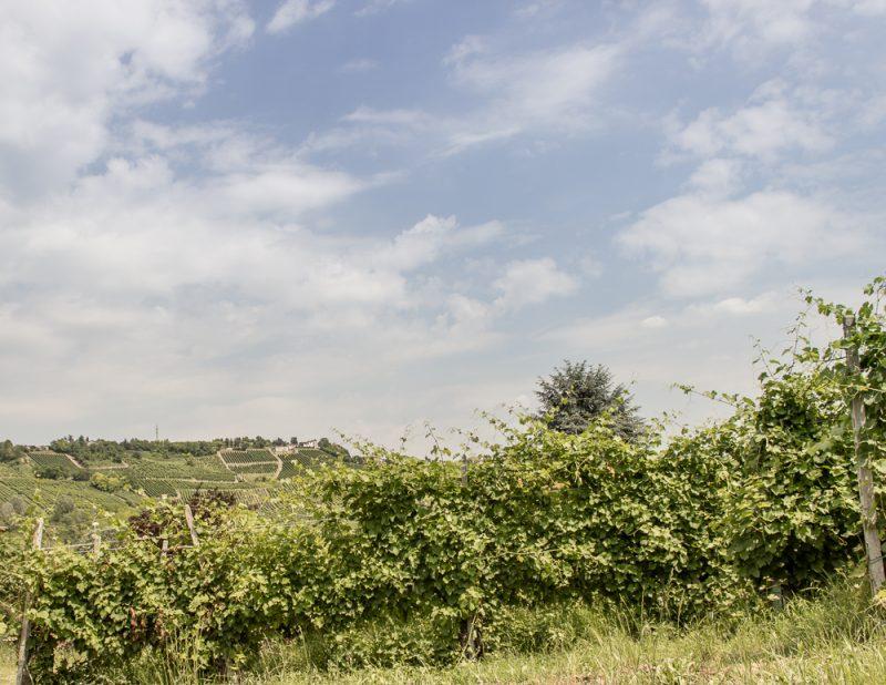 panorama-vigna-canne