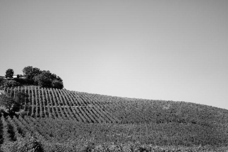 azienda-agricola-poggio-rebasti