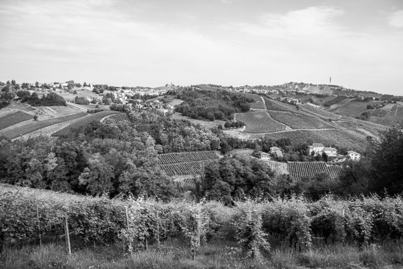 panorama-azienda-agricola-carla-colombo