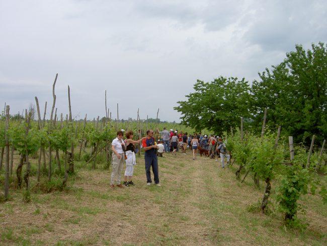 scollinando2013 041 e1561701818404 Scollinando tra le vigne del Buttafuoco Storico 2017