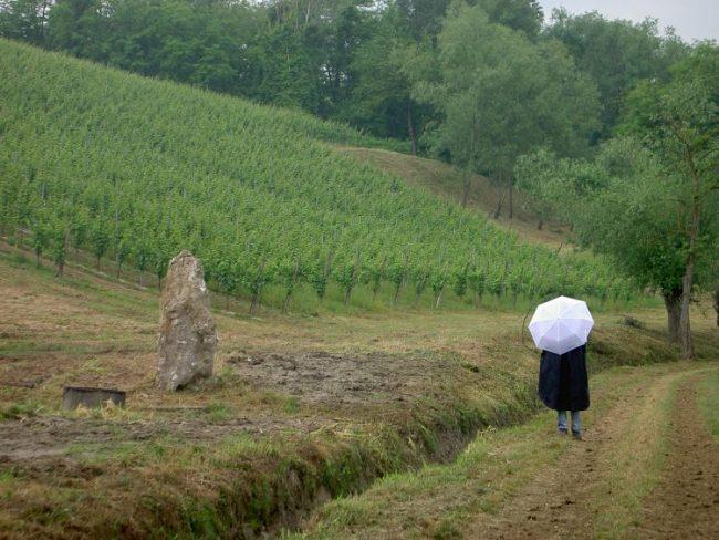 scollinando2013 051 e1561701776172 Scollinando tra le vigne del Buttafuoco Storico 2017